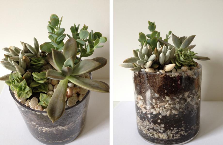 how to build a succulent terrarium